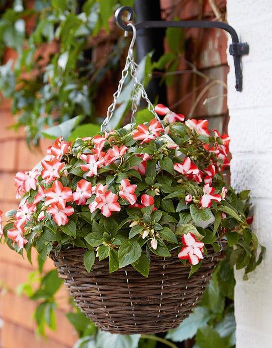 decorative vases flower idea