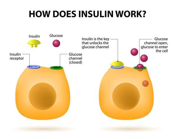 how do insulin works