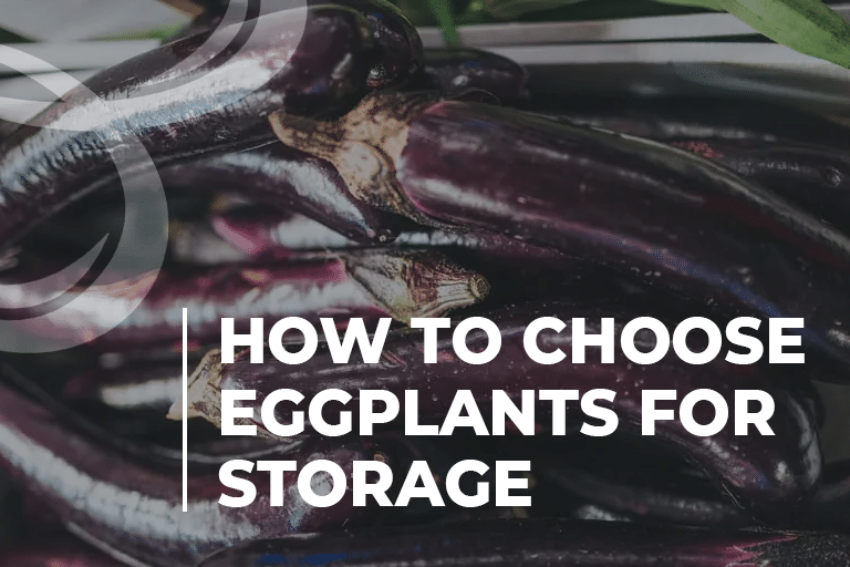 How to Choose Eggplants for Storage