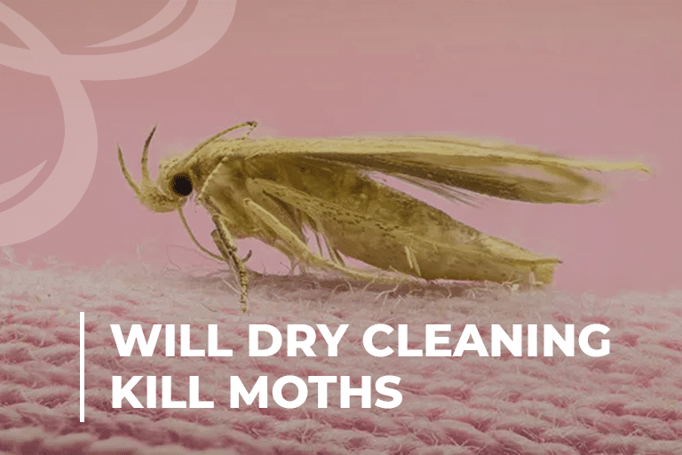 Will Dry Cleaning Kill Moths