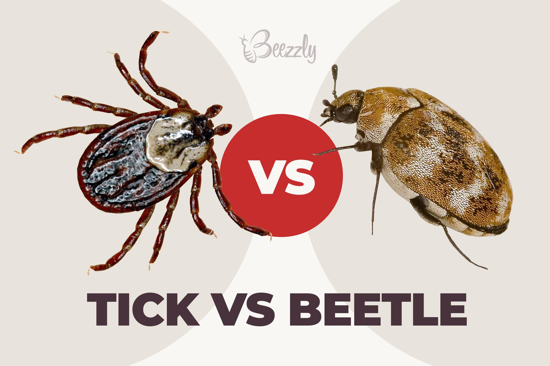 tick vs beetle