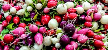 best way to store radishes