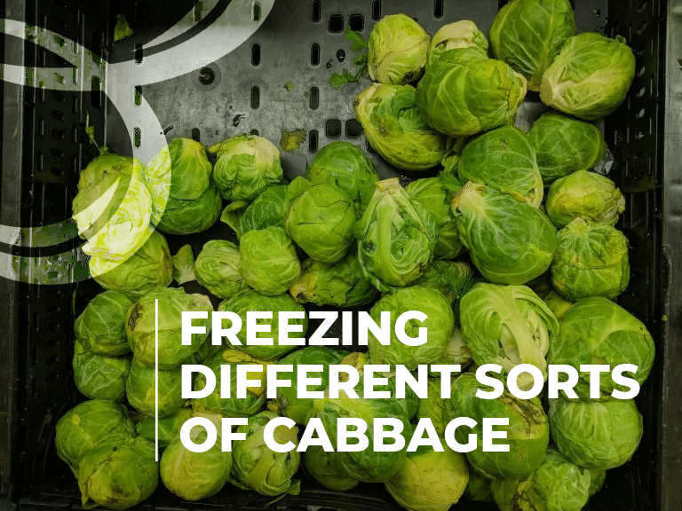freezing different sorts of cabbage