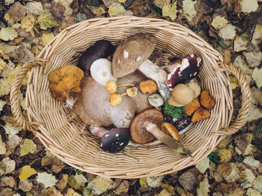 All the secrets of the mushroom shelf