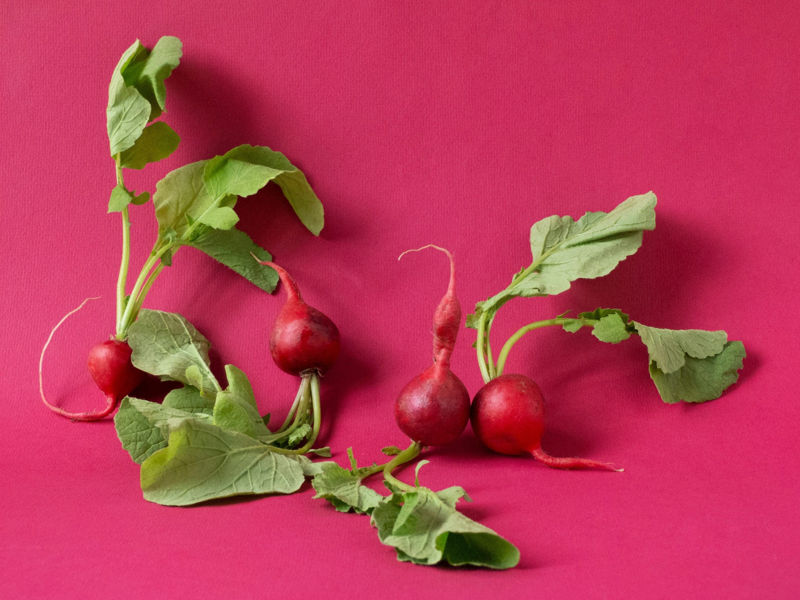 how long do radishes last