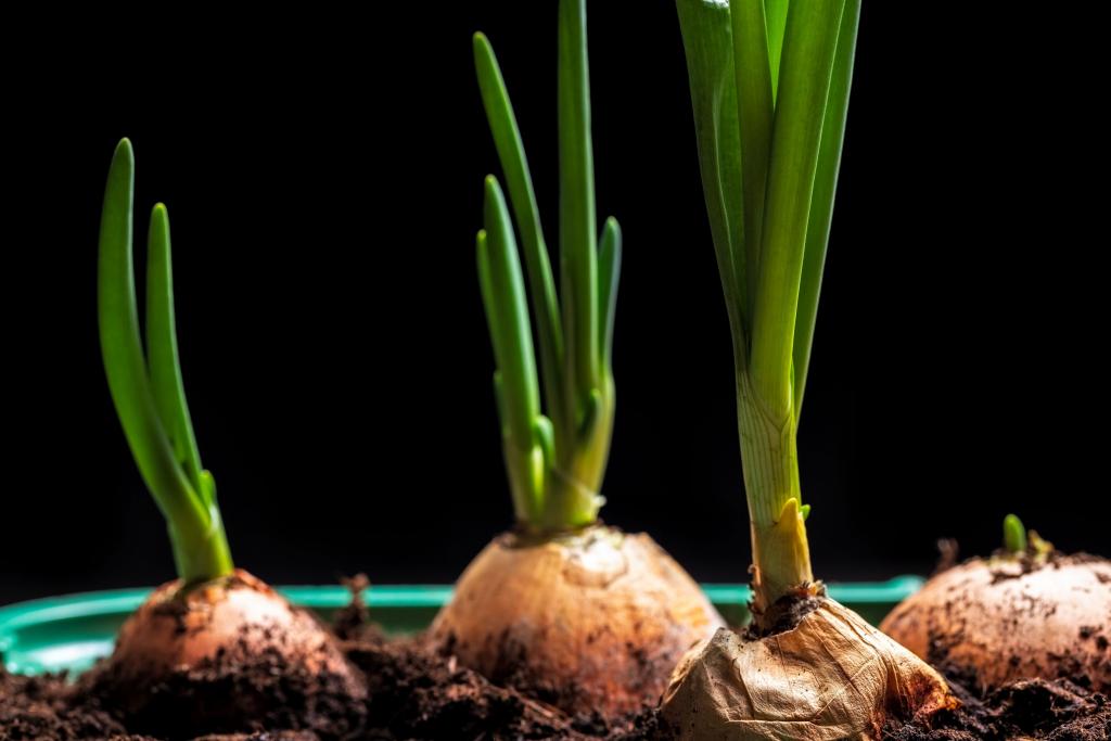 How to Keep Green Onions Fresh?