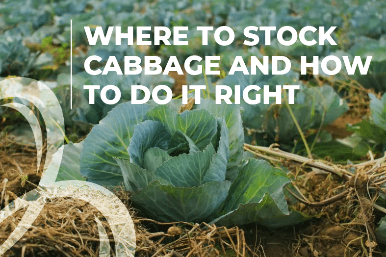 where to stock cabbage and how to do it right