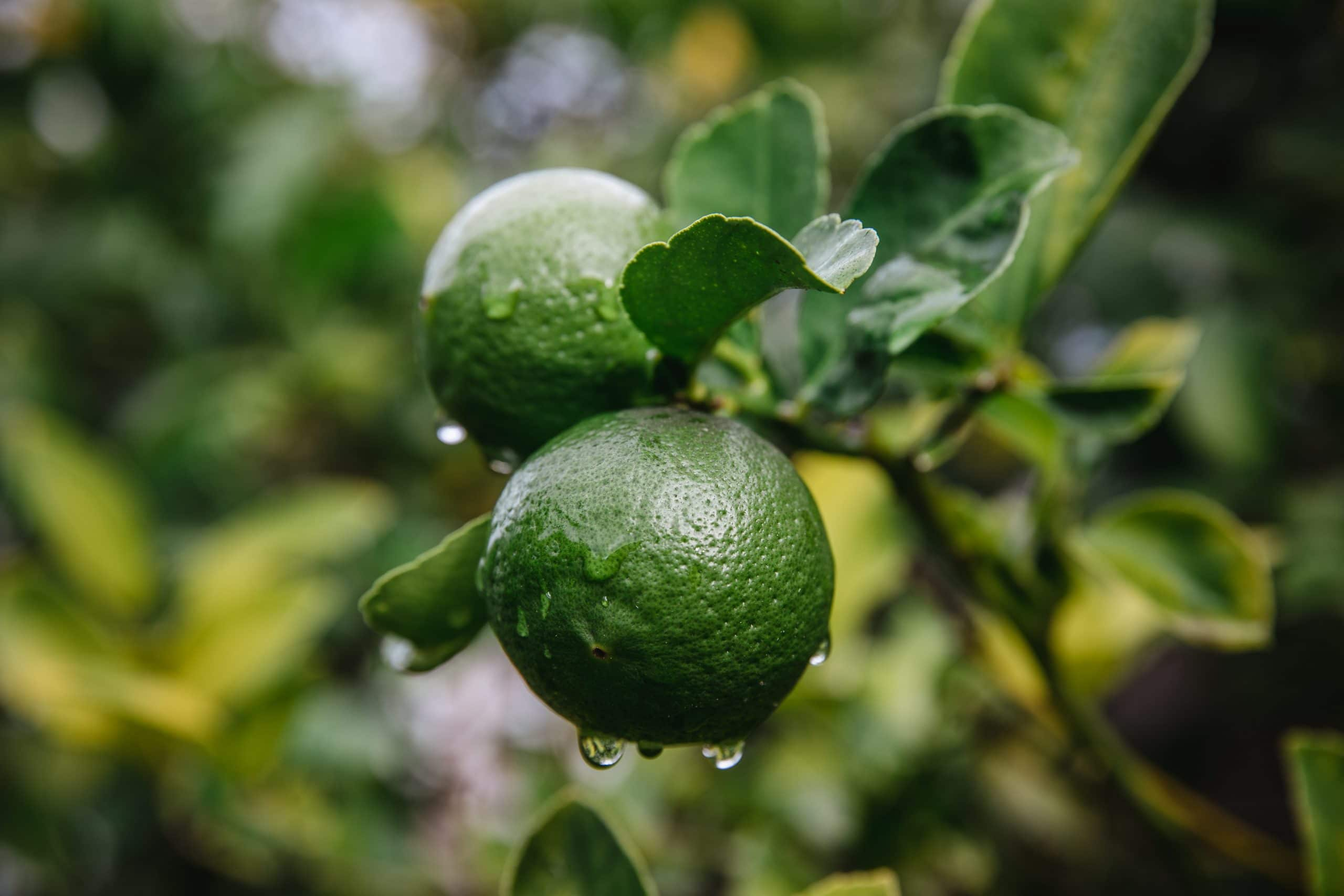 Are limes bad for you