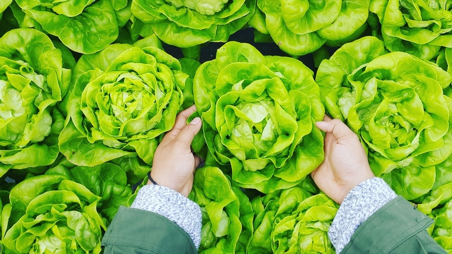 How to Use Lettuce That's Going Bad