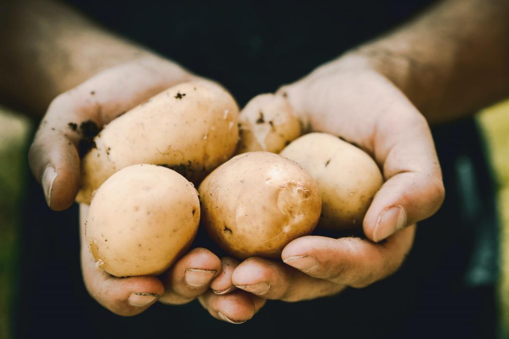until potatoes go bad,