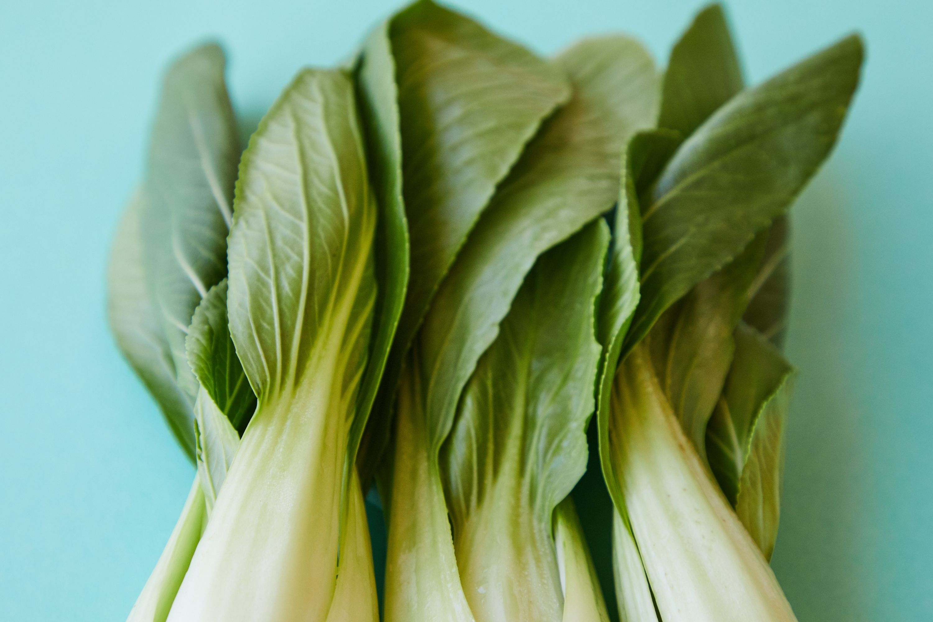 Do You Have To Blanch Bok Choy Before Freezing