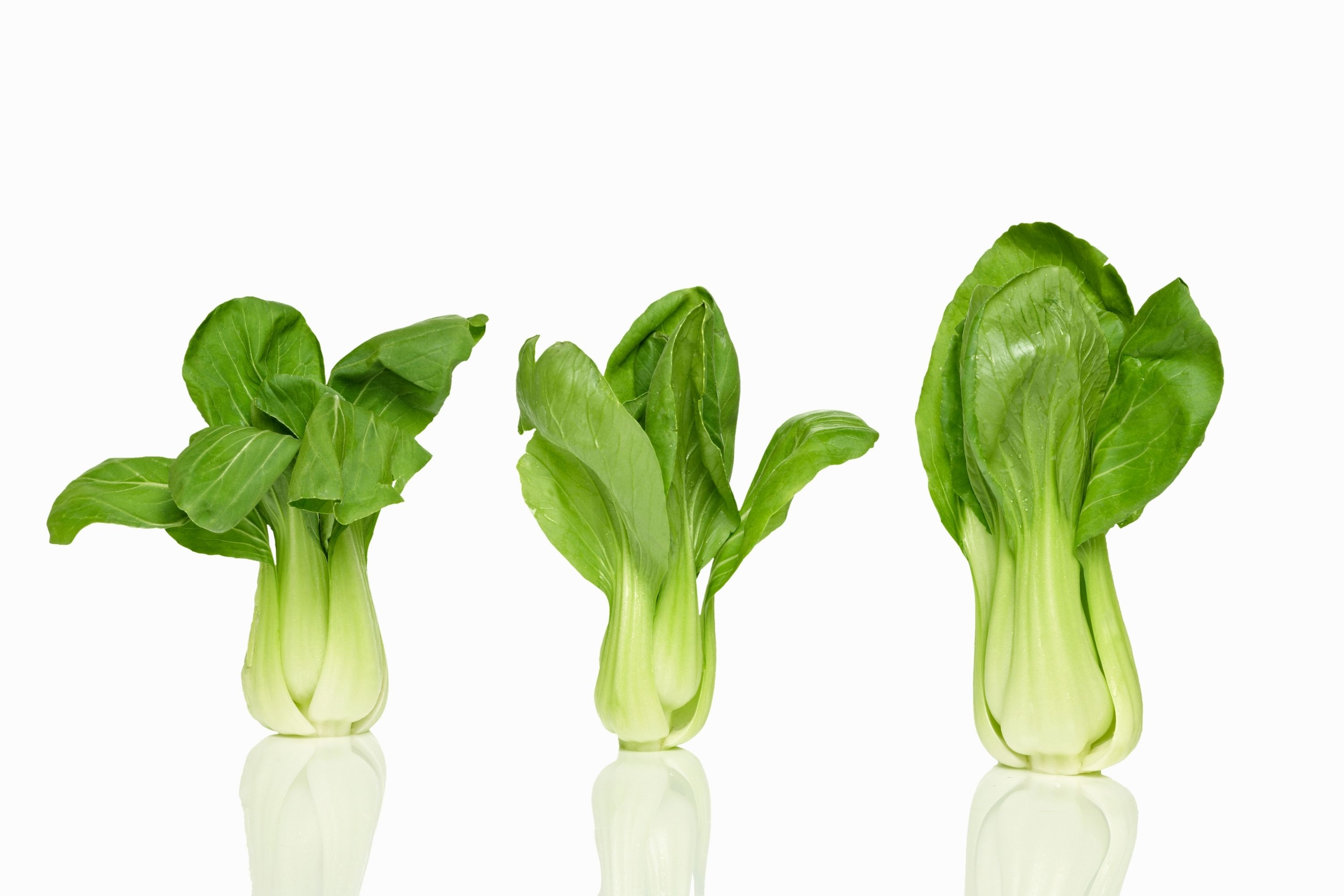 How Do You Store Bok Choy In The Freezer