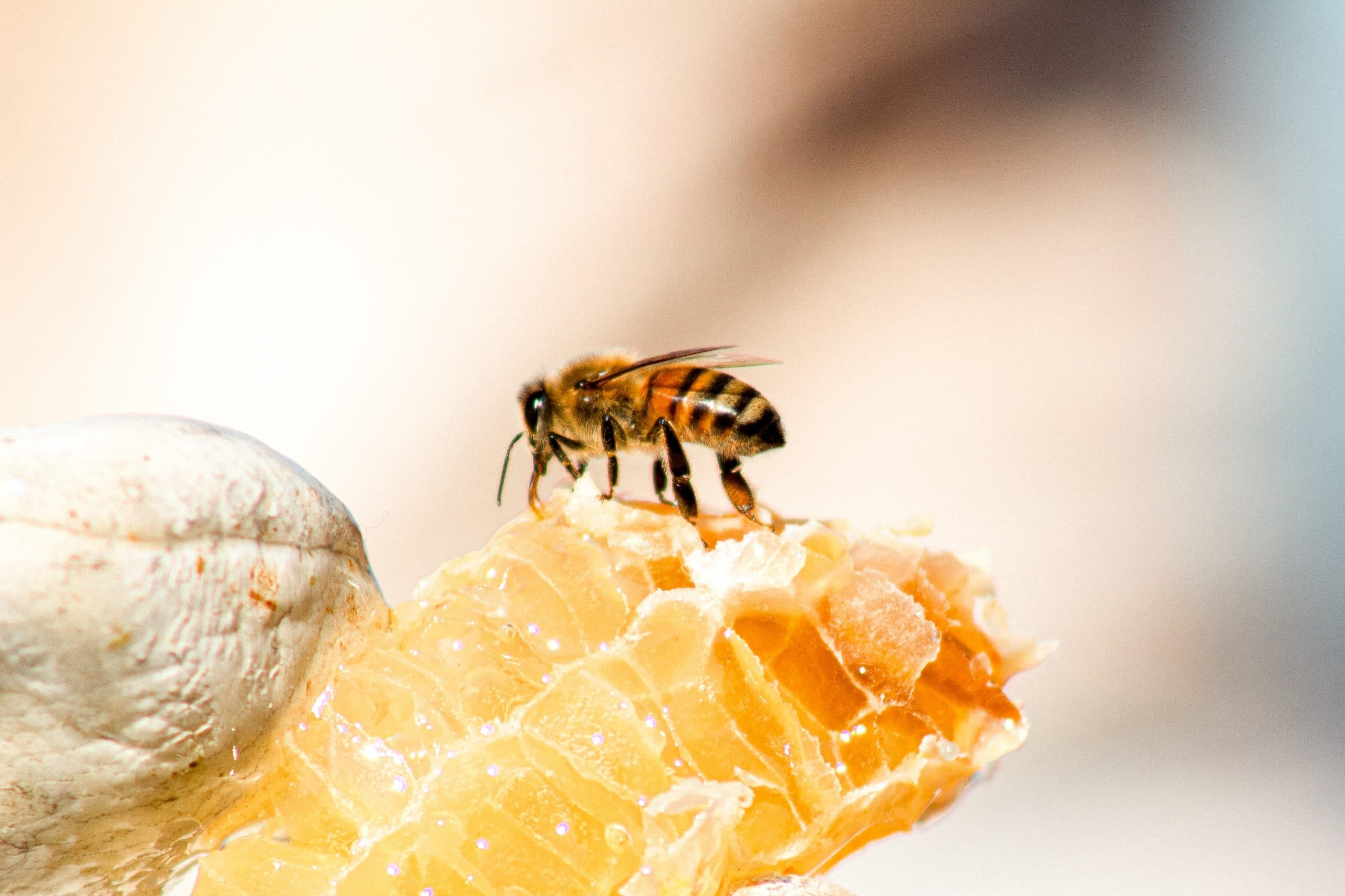 Does honey ever expire