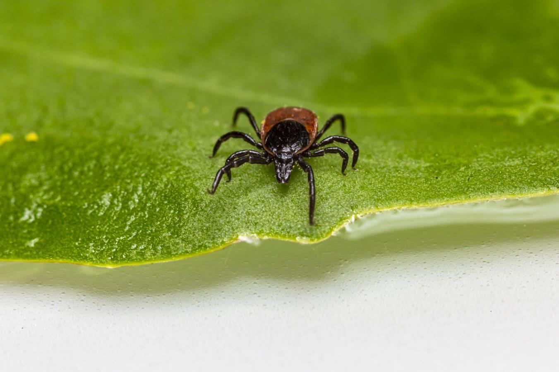 How to Prevent Ticks In Your Garden