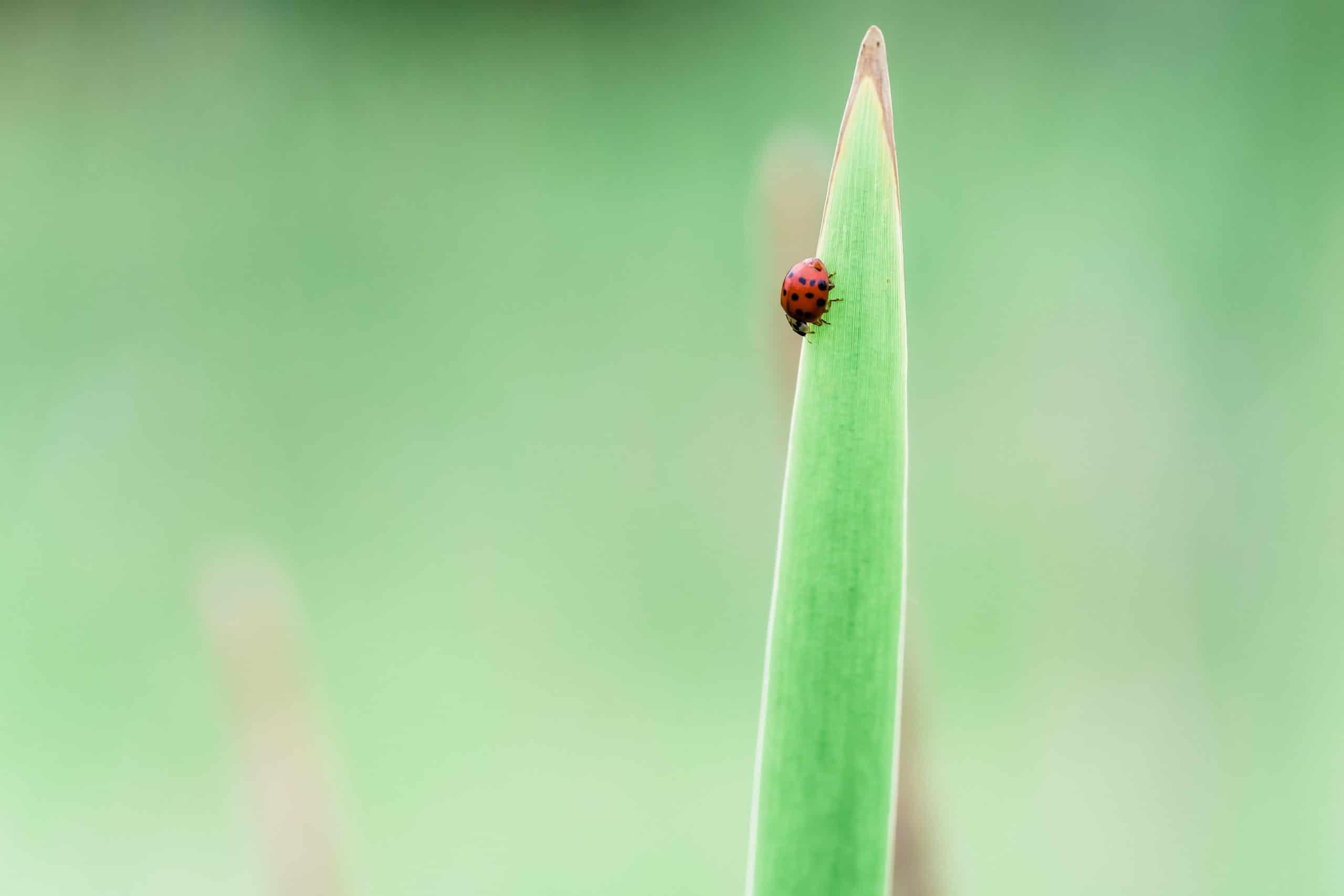 natural predators of ticks