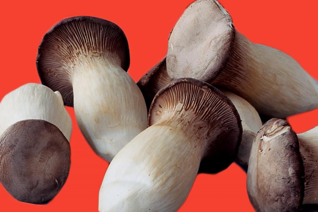 King Trumpet Fungus