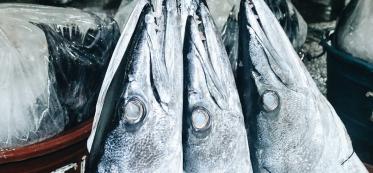 Rare seafood ultimate guide