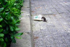 What Makes Mice Visit Us