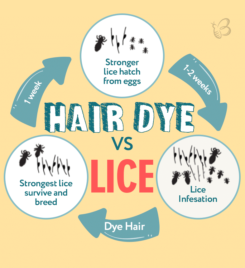 hair dye to remove lice