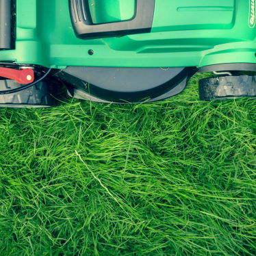 Everything you ever wanted to know about growing a perfect lawn in your garden