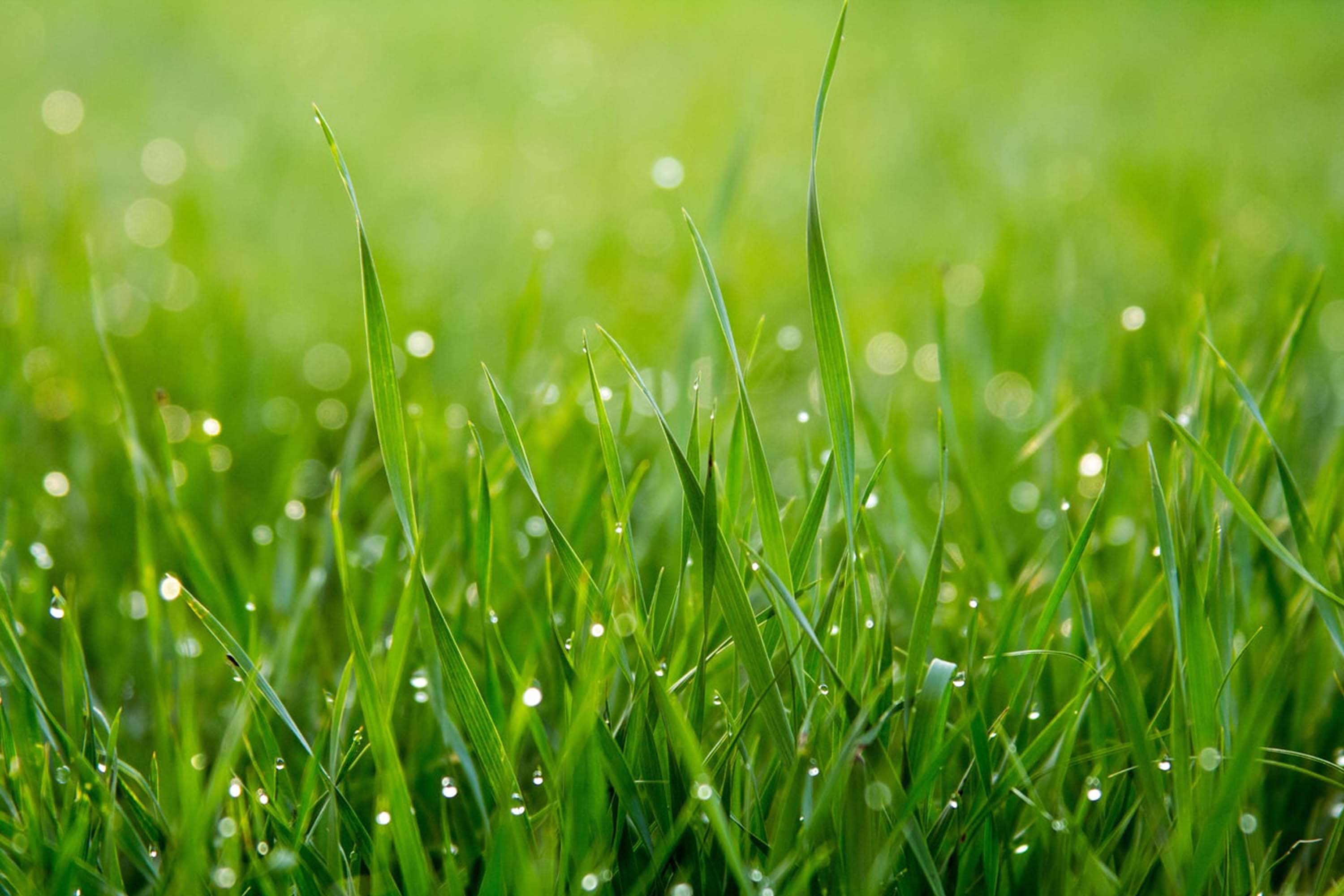 vHow Long Should You Water New Grass Seed