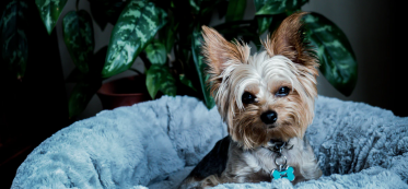 designing and organizing an apartment for dog's owners