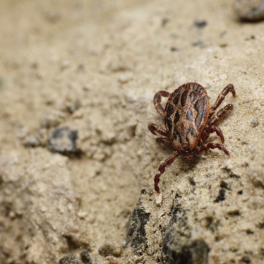 How Long Can Ticks Live On Clothing