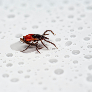 can tick drown