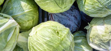 what to cook from cabbage