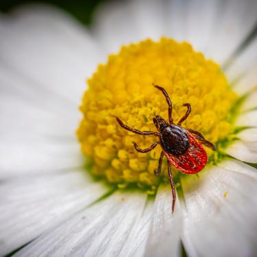 What Purpose Do Ticks Serve