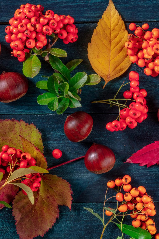 Autumn flatlays (2)