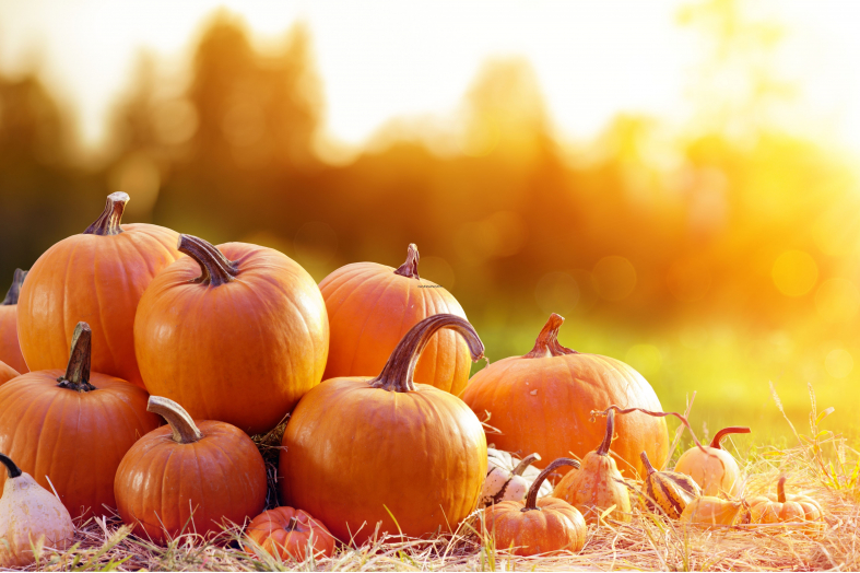 How to Tell If a Pumpkin Is Ripe