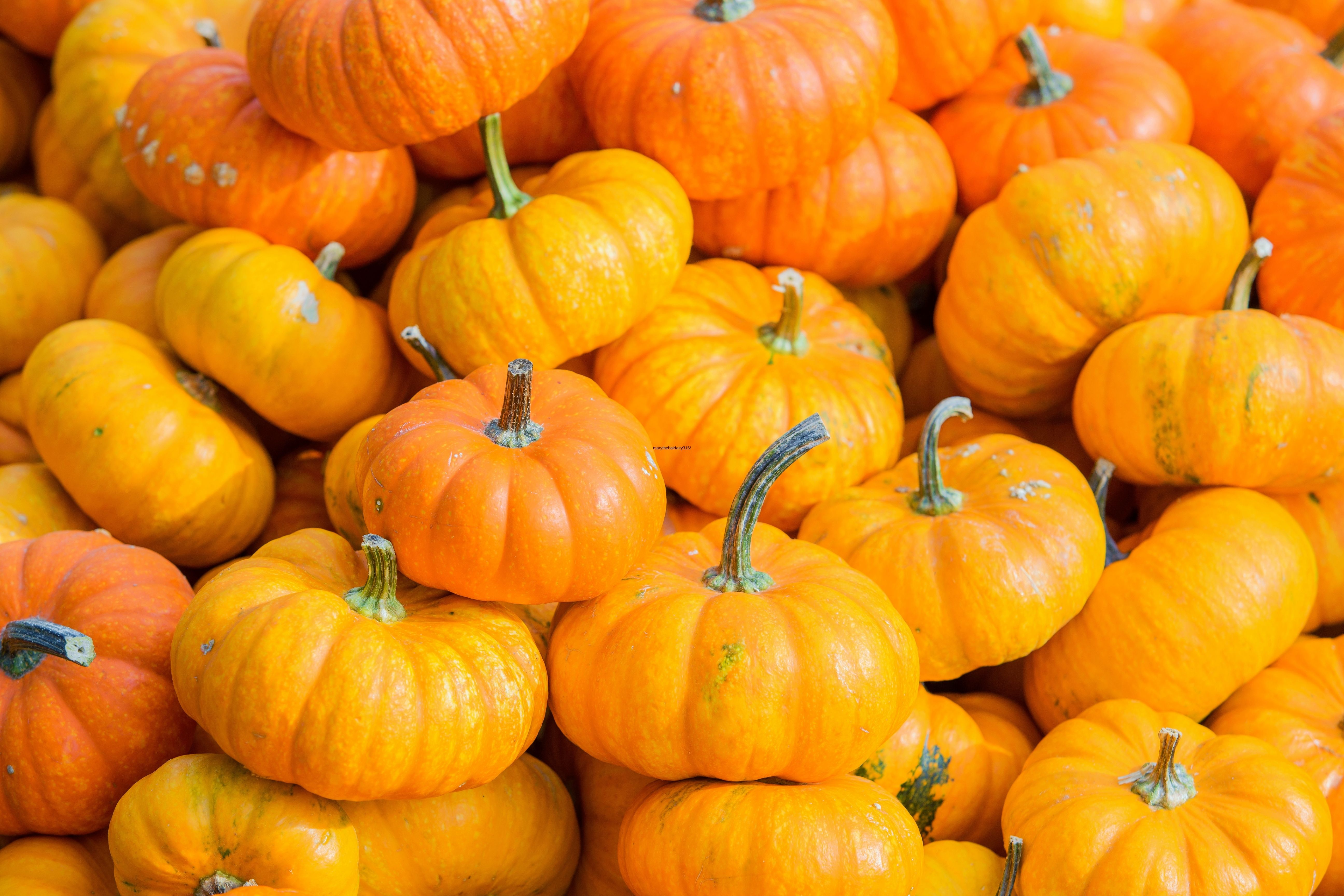How to Tell If a White Pumpkin Is Ripe