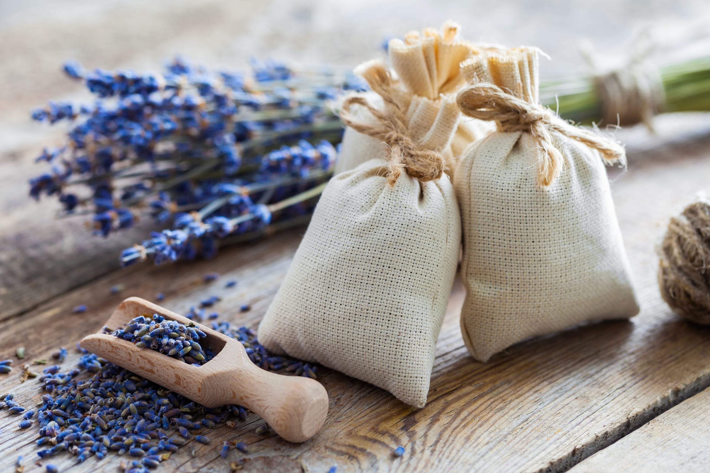 Lavender Pillows May Protect Your Brain