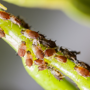 Organic Ways to Control Pests in Interior Landscapes