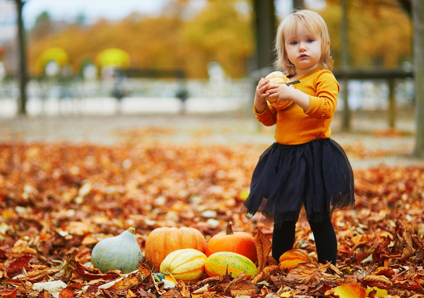 Pumpkins, more pumpkins!