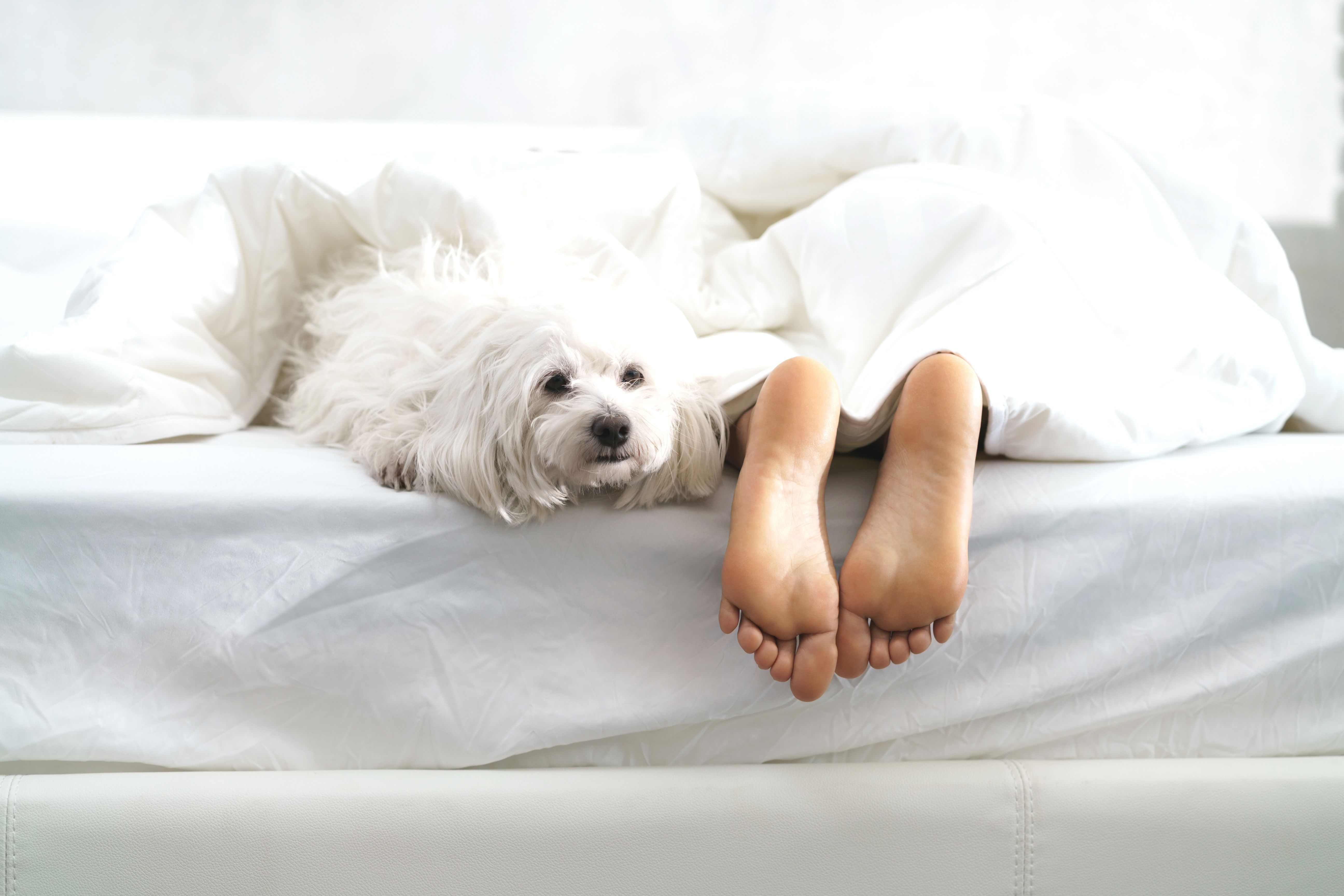 Sleeping Next To Your Furry Friend