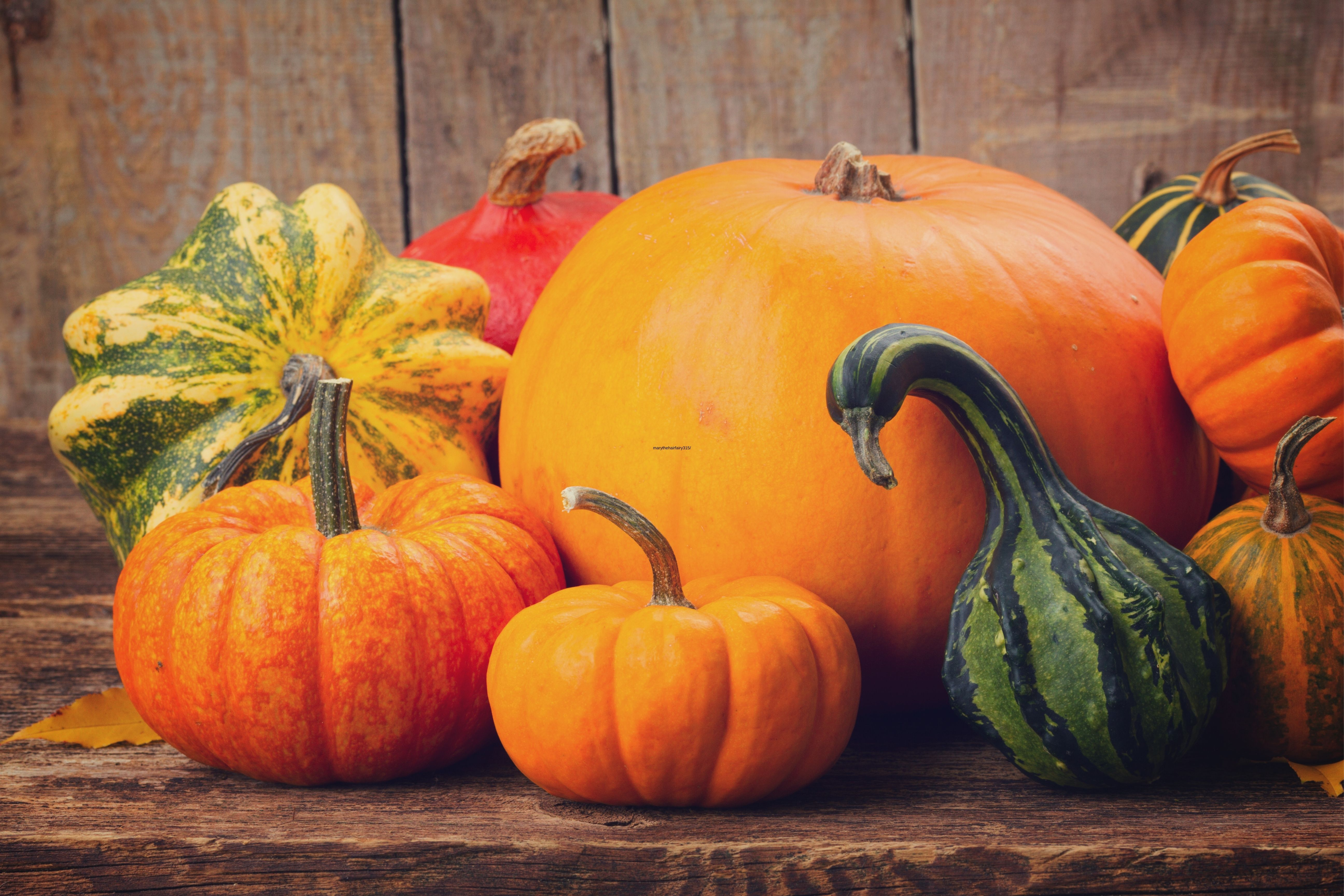 Storing Your Pumpkin Whole. Tips And Recommendations